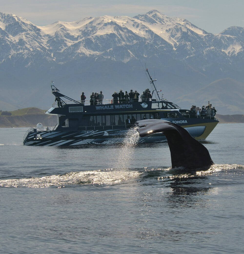 Whale watching tours in Kaikoura New Zealand