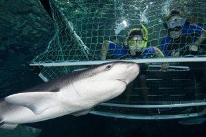 cb-visit-discover-top10-adventure5-wildlife_0